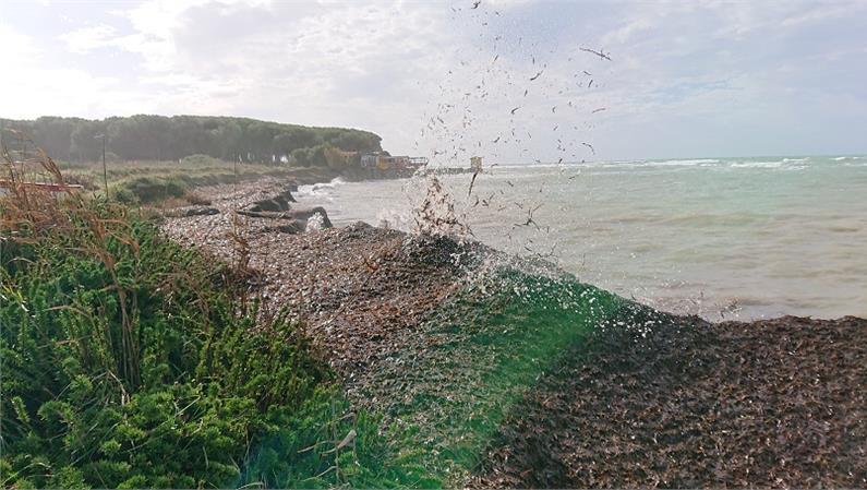SEMINARIO: La banquette e gli spiaggiamenti di Posidonia oceanica: ruolo ecologico, monitoraggio ed aspetti gestionali
