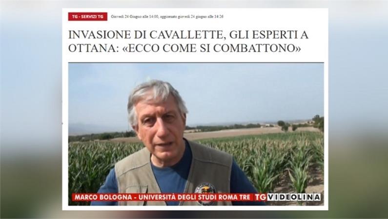 """Invasione di cavallette a Macomer e ad Ottana in Sardegna. Gli esperti: """"Ecco come si combattono"""""""