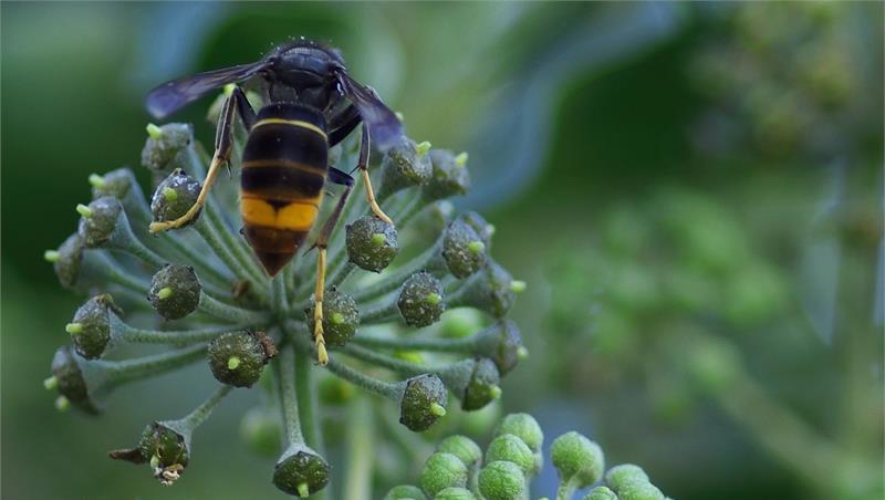 Invertebrati - Una ricerca del Dipartimento di Scienze mappa le specie aliene invasive